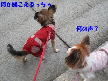 IMG_1046 ブログ