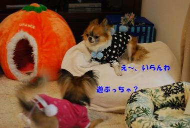 DSC_0097 ブログ