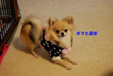 DSC_0099 ブログ