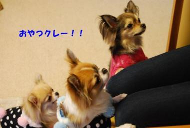 DSC_0141 ブログ