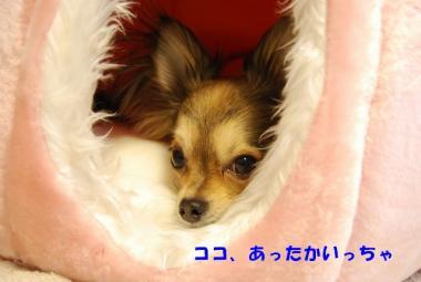 DSC_0238 ブログ