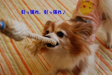 DSC_0355 ブログ
