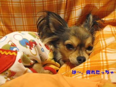 IMG_1116 ブログ