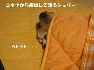 IMG_0957 ブログ