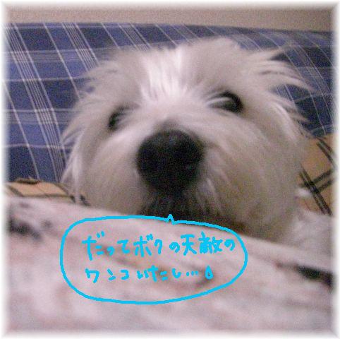 CIMG8983.jpg