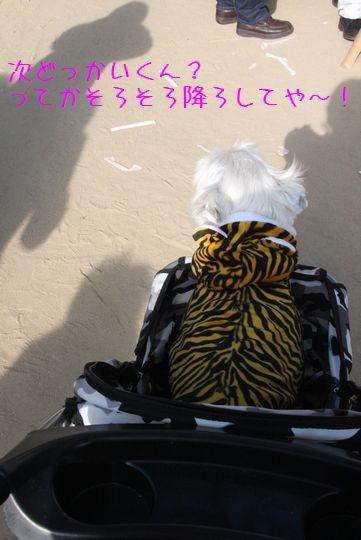 IMG_8168.jpg