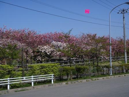 DSC66.jpg