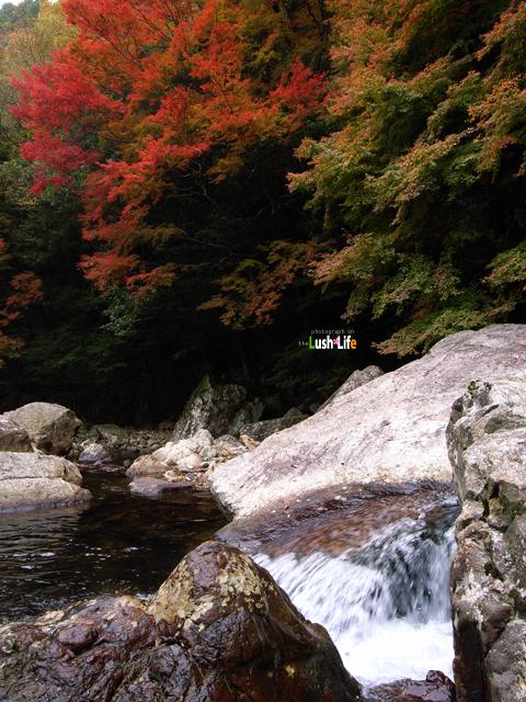 20101113_04.jpg