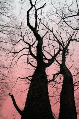 表情のある樹