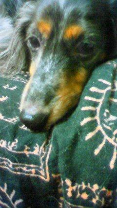娘犬寝そう