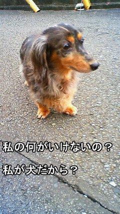娘犬つぶやき5