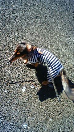 囚人服で娘犬
