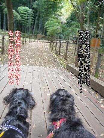 森林公園で5