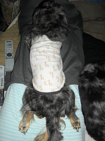 母犬足を伸ばして寝る