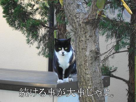 実家の知らない猫