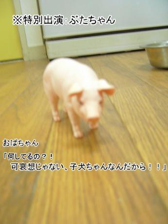 豚ちゃん出演