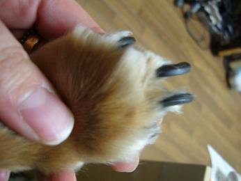 母犬爪・前
