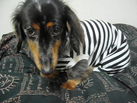 囚人服の娘犬