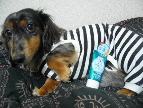 ハンドクリームと娘犬