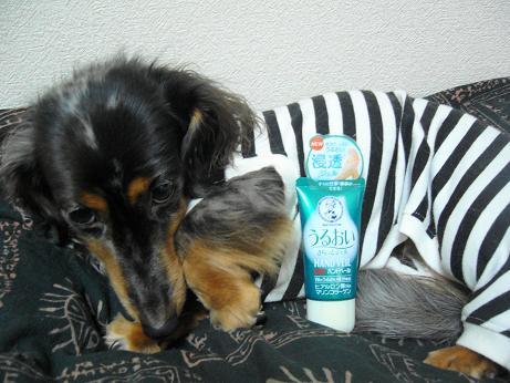 ハンドクリームと娘犬3