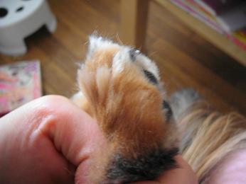 母犬の爪・後