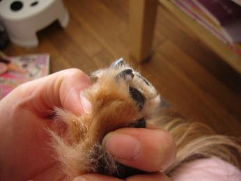 母犬爪・後