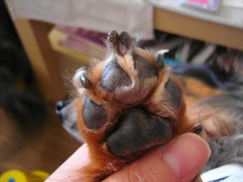 娘犬の爪・前