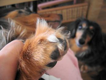 娘犬の爪・後
