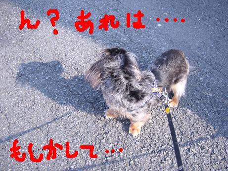 娘犬見つけた?
