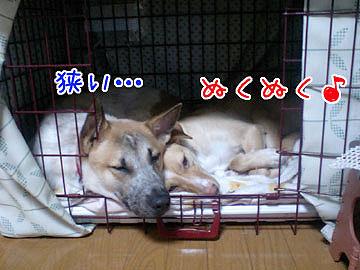 20081205-01.jpg