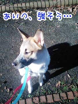 20081224-03.jpg