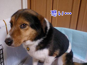 20090205-03.jpg