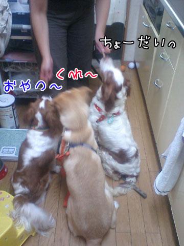 20090710-04.jpg
