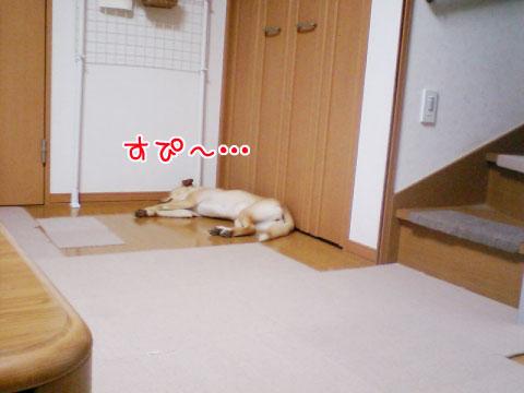 20090806-07.jpg