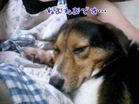 20090806-09.jpg