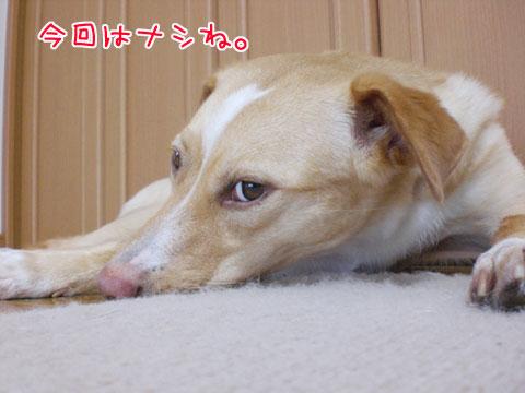 20090807-07.jpg