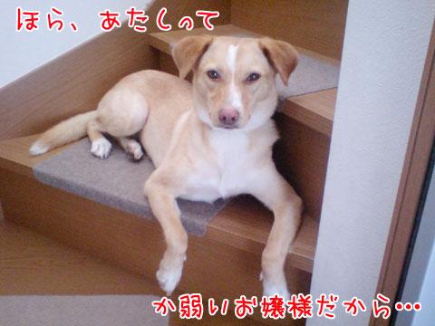 20090808-01.jpg