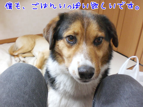 20090808-03.jpg