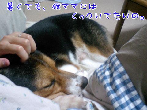 20090817-01.jpg