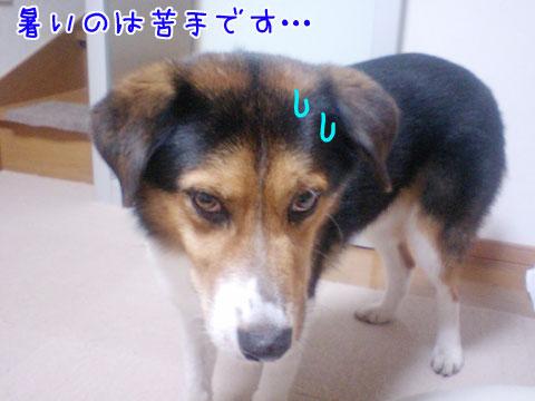20090817-02.jpg