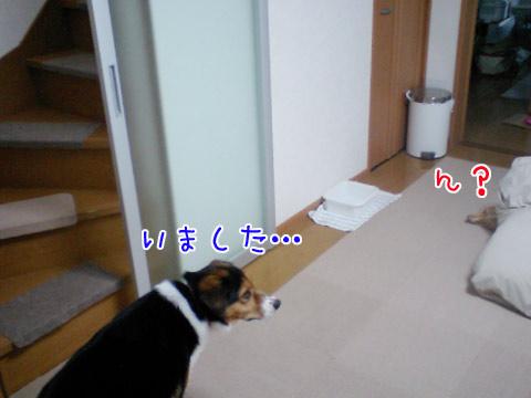 20090831-04.jpg