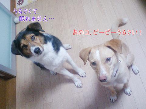 20090913-04.jpg