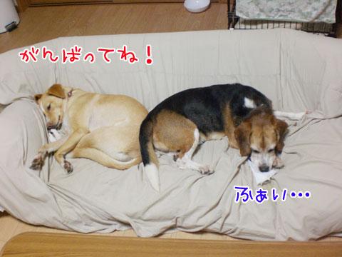20091003-03.jpg