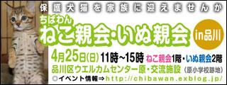 20100414-01.jpg