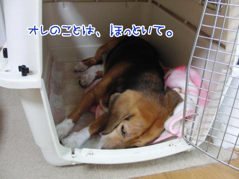 20110625-03.jpg