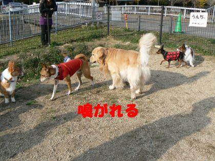 自由な犬2