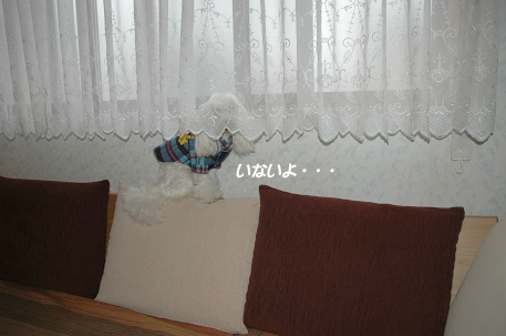 20081217-002.jpg