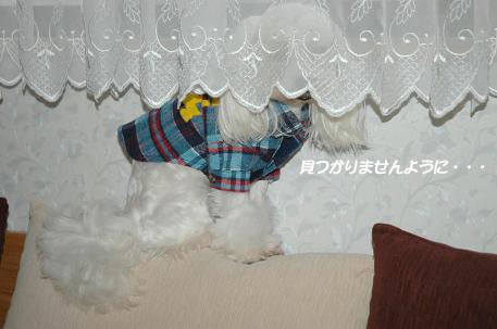 20081217-004.jpg
