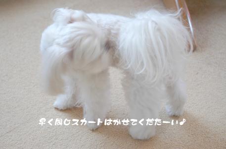 20090214-050.jpg