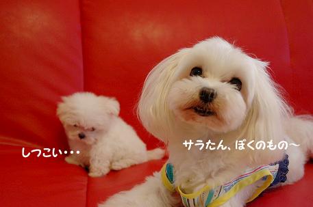 20090725-d-052.jpg